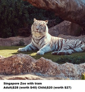 A Big White Bengal Tiger Sits In The Shade On The Park In The Na