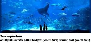 9- sea aquarium