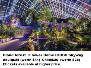 GBB cloud forest